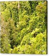 Bird View Of Lush Green Sub-tropical Nz Rainforest Acrylic Print
