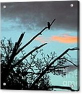 Bird Watching Sunrise Acrylic Print
