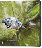 Bird Whirl Acrylic Print