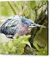 Bird Whirl2 Acrylic Print