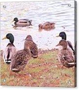 Bird Wildlife Acrylic Print