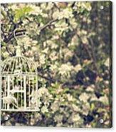 Birdcage In Blossom Acrylic Print