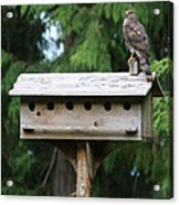 Birdhouse Takeover  Acrylic Print