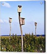 Birdhouses In Salt Marsh. Acrylic Print