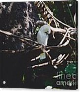 Birdie Sitting In The Tree Acrylic Print