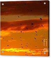 Birds Against Sunset Sky Acrylic Print