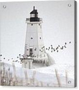 Birds And Lighthouse Acrylic Print