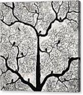 Birds And Trees Acrylic Print