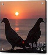Birds At Sunrise Acrylic Print by Nelson Watkins