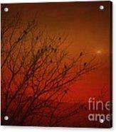 Birds At Sunset Acrylic Print