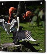 Birds Gather Acrylic Print