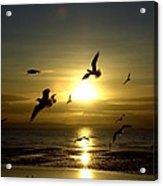 Birds Gathering At Sunset Acrylic Print
