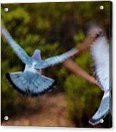 Birds In Flight 030515ab Acrylic Print