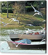 Birds In Flight At The Lake Acrylic Print
