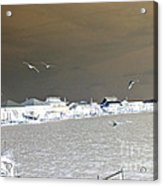 Birds In Flight Over Lafitte Bay Acrylic Print