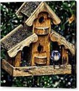 Birds In Oregon Acrylic Print