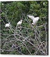 Birds In The Brush Acrylic Print