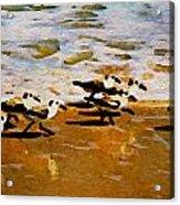 Birds In The Surf Acrylic Print