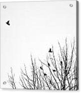 Birds In Tree Acrylic Print