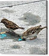 Birds Like Cotton Candy Acrylic Print