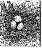 Birds Nest Acrylic Print