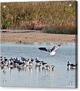 Birds Of Cutler Bay Wetlands 42 Acrylic Print