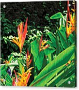 Birds Of Paradise Acrylic Print