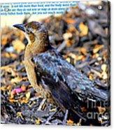 Birds Of The Air Acrylic Print
