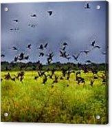 Birds Of The Wetlands V11 Acrylic Print