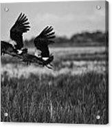 Birds Of The Wetlands V12 Acrylic Print
