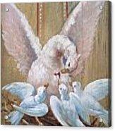 Birds Of Toledo Street Art Acrylic Print