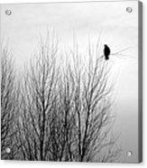 Birds Of Winter I Acrylic Print