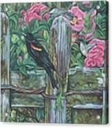 Birds On A Fence Acrylic Print