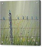 Birds On A Fence Acrylic Print