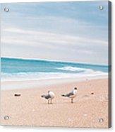 Birds On The Beach 0004 Acrylic Print