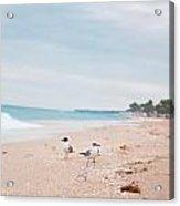 Birds On The Beach 0006 Acrylic Print
