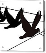 Birds On The Wire Acrylic Print by Laura Pierre-Louis