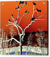 Birds On Tree Acrylic Print