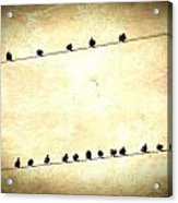 Birds On Wires Acrylic Print