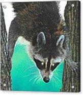 Birdseed Bandit Acrylic Print