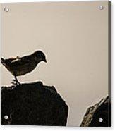 Birdy Acrylic Print