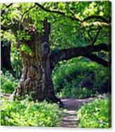 Birnam Wood Scotland Acrylic Print