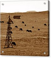 Bison And Windmill Acrylic Print