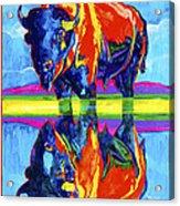 Bison Reflections Acrylic Print
