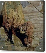 Bison Vintage Style -photo- Art Acrylic Print by Ann Powell