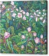 Bisset Park Hibiscus Acrylic Print