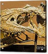 Bistahieversor Dinosaur Skull Fossil Acrylic Print