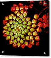 Bits N Pieces Waterlily Acrylic Print