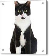 Black & White Cat Acrylic Print