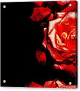 Black And Rose Acrylic Print
